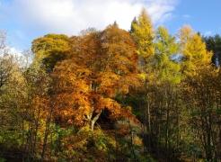 autumn-colours-assel-stinchar-valley-021