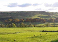 autumn-colours-assel-stinchar-valley-037