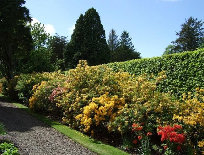 Kirkhill Garden