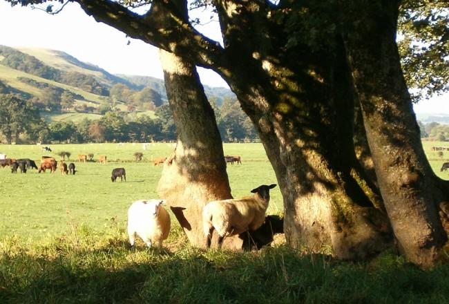 Pinwherry trees